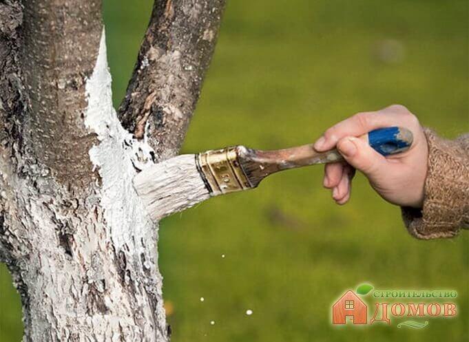 Весенняя обработка фруктовых деревьев