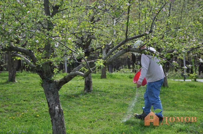 Подкормка фруктовых деревьев: сроки, удобрения